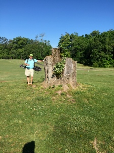 No trees were harmed in the writing of this blog post, Well except that one. (John Stone for scale)
