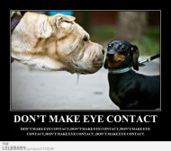 dont-make-eye-contact
